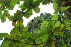 A parte superior da montanha pode ser considerada através da coroa da árvore imagens de stock