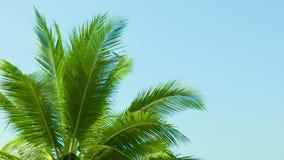 Parte superior da palmeira no fundo do céu azul vídeos de arquivo