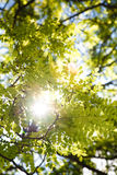 Parte superior das árvores Imagem de Stock Royalty Free