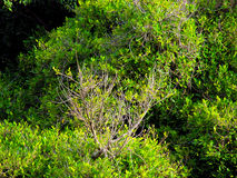 Parte superior das árvores filiais imagens de stock