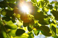 Parte superior das árvores Foto de Stock Royalty Free