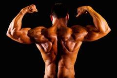 Parte superior do Bodybuilder fotografia de stock royalty free