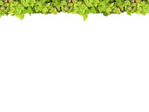 Parte superior verde do frame ilustração stock
