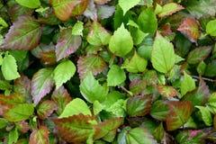 A parte superior verde e marrom sae do fundo abstrato da natureza fotos de stock