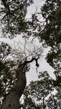 Parte superiore degli alberi Immagini Stock Libere da Diritti