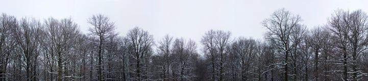 Parte superiore degli alberi di inverno Fotografia Stock