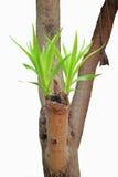 Parte superiore dei fogli dell'albero. Fotografia Stock