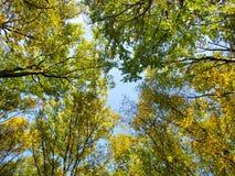 Parte superiore dell'alberi Fotografie Stock