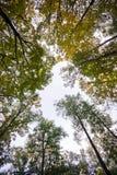 Parte superiore dell'alberi Fotografia Stock Libera da Diritti