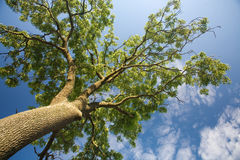 Parte superiore dell'albero Immagine Stock