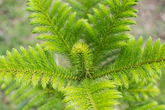 Parte superiore dell'albero Fotografie Stock Libere da Diritti