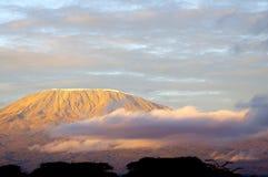 Parte superiore della montagna di kilimanjaro nell'alba fotografia stock
