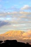 Parte superiore della montagna di kilimanjaro nell'alba immagine stock