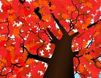 Parte superiore di autunno di un albero Immagini Stock