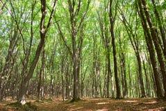 Parte superiore verde dell'albero fotografia stock