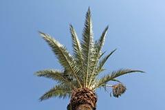 Parte superiore verde della palma Fotografie Stock