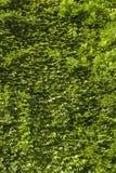 Parte traseira coberto de vegetação verde imagem de stock
