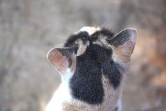 A parte traseira da cabeça de um gato de gato malhado Fotos de Stock Royalty Free
