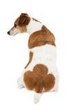 A parte traseira do cão, burro, nádegas Fotos de Stock Royalty Free