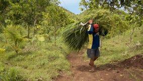 Parte traseira levando da grama do homem indonésio local sobre video estoque