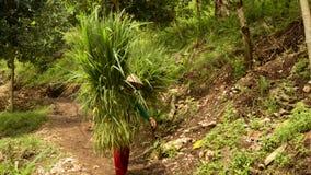 Parte traseira levando da grama dos povos indonésios locais sobre video estoque