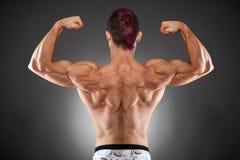 Parte traseira muscular Imagem de Stock