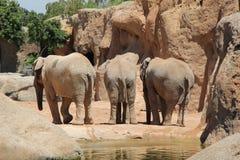 Parte trasera de tres elefants Fotografía de archivo libre de regalías