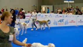 Partecipanti all'anello sull'esposizione canina del mondo archivi video