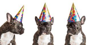 Partei-Hunde Stockfotografie