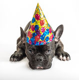 Partei-Hunde Lizenzfreie Stockfotografie