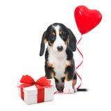 Parteihund Lizenzfreies Stockfoto