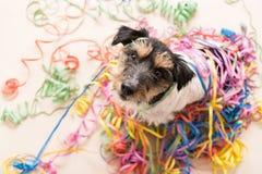 Parteihund Jack Russell, der zum Karneval bereit ist, schaut oben stockbild