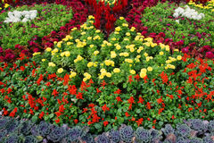 Parterre. Many colorful and beautiful flowers Stock Image