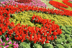 Parterre. To celebrate the 60th anniversary of founding of the PRC,many parterres are built in Beijing Olympic Park Royalty Free Stock Photography