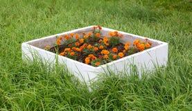 Parterre avec des fleurs dans l'herbe photo libre de droits