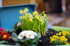 Parterre avec des fleurs et des ornements en bois pour Pâques dans la petite ville en France images libres de droits