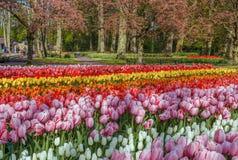 Parterre avec des tulipes, Keukenhof, Pays-Bas Photo stock
