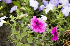 Parterre avec les fleurs merveilleuses image stock