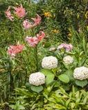 Parterre avec les hybrides asiatiques d'hortensia et de lis sur le backg Images libres de droits