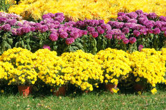 Parterre Royalty Free Stock Photography