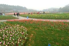 Parterre dans le jardin botanique Image libre de droits
