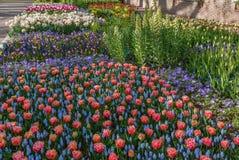Parterre dans le jardin de Keukenhof, Nederlands Photo stock