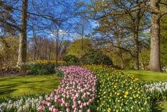 Parterre dans le jardin de Keukenhof, Nederlands Image libre de droits