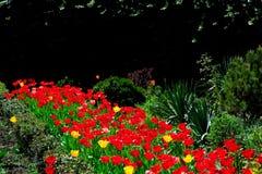 Parterre de jardin avec les tulipes rouges photos stock