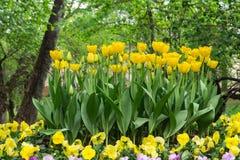 Parterre des tulipes et des pancies en vieux parc Photo libre de droits