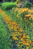 Parterre diagonal avec les soucis oranges parmi l'herbe verte i photo stock