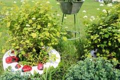 Parterre fait maison avec le belles CET et usines, les verts et l'herbe verte photos stock