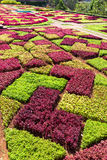 Parterre lumineux Images stock