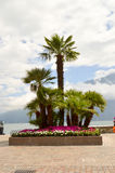 Parterre of palm trees Stock Photography