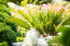 Parterre, petit palmier vert dans le jardin Bel aménagement Conception de jardin photo libre de droits